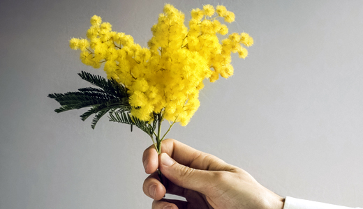 Mujer hermosa, te regalo una mimosa.